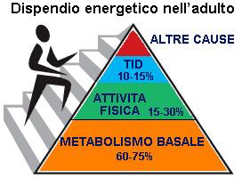 dietista-03